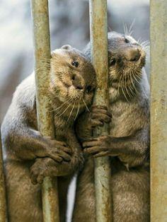 Otter dump for Pete's sake - Imgur