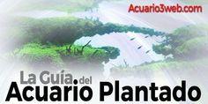 La Gran Guía sobre los Acuarios Plantados para principiantes en Acuario3web.com Aquascaping, Planted Aquarium, Paludarium, Plantar, Cactus, Design, Terrariums, Aquariums, Freshwater Plants