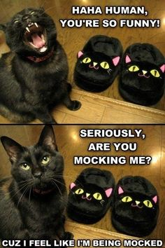 Spelling and ending problems Grammar win: Ha ha human, you're so funny! Seriously, are you mocking me? Because I feel like i'm being mocked.