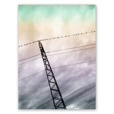 Fåglar på elledning