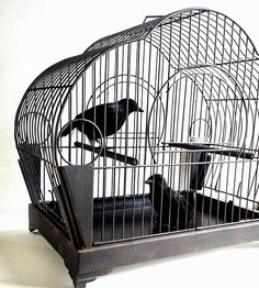 Hendryx Black Wire Painted Birdcage Crows Perches Bird