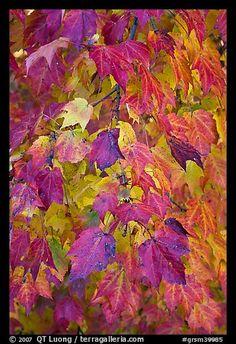 Foliage in the Smoky Mountains