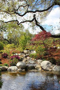 Huntington Botanical Garden    A lovely Japanese garden within Huntington Library and Gardens in Pasadena, California.