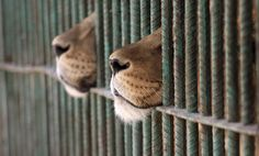 caged :(