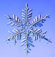 """Snowflakes under the microscope""  These are REAL snowflakes!  Awesome!!!!!"
