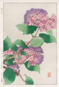 Hydrangea from Shodo Kawarazaki Spring Flower Japanese Woodblock Prints Japan Illustration, Japanese Art Styles, Japanese Prints, Art Floral, Oriental Flowers, Illustration Botanique, Japanese Painting, Chinese Painting, Chinese Art