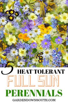 Some awesome colorful perennials that thrive in FULL SUN ! All of these plants a. - Some awesome colorful perennials that thrive in FULL SUN ! All of these plants are in full sun in m - Long Blooming Perennials, Perennial Grasses, Best Perennials, Hardy Perennials, Flowering Shrubs, Perennial Gardens, Ornamental Grasses, Full Sun Container Plants, Full Sun Plants