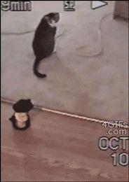 勇敢な猫のバトルGIF画像