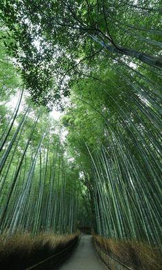 見渡す一面 緑の陰影 嵐山・嵯峨野(京都)#嵐山 #京都 #Kyoto