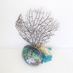 Black Sea Fan Paua Shell Branch Coral and Aqua Sea Glassl Nautical Decor