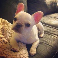 So cute! She looks just like Presley!