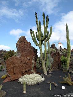 Jardín de cactus - Lanzarote - Kaktus Garten