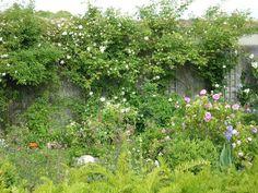 Overgrown, romantic french garden | Goumyflo.canalblog.com