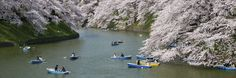 Chidorigafuchi in the spring Pinterest users can get 20% off the ebook with this code: PINT20 Tokyo, Coding, River, Outdoor, Outdoors, Tokyo Japan, Outdoor Living, Garden, Rivers