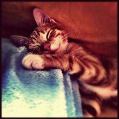 my catty