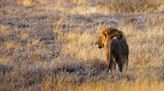 The Travel Diet's Dena Roché shares tips on what to consider before booking an African safari. A Luxe Namibia Safari : A Conversation with Dena Roché Dena, African Safari, Brown Bear, Travel Around, Animals Beautiful, Mammals, Nature Photography, Conversation, Big