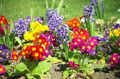 New Homes in Utah Choosing the Best Plants for Your Utah Garden ...