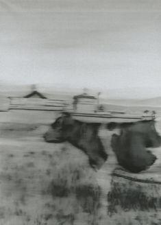Gerhard Richter, 1965, Kuh II /cow II. 157x113cm, Oil on canvas. Staatsgalerie Stuttgart.Quelle/ source: gerhard - richter.com
