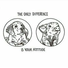 Dog illustration art cute puppy ink vegan veganism animal rights pig attitude comparison cute animals compassion Vegetarian Quotes, Vegan Quotes, Vegetarian Lifestyle, Vegetarian Recipes, Vegan Facts, Vegan Memes, Vegan Humor, Why Vegan, Vigan