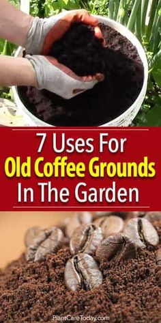 Garden Ideas Discover 7 Uses For Old Coffee Grounds In The Garden Adding coffee grounds in the garden has many benefits for compost fighting slugs staining benches compost tea growing mushrooms and more [LEARN MORE] Garden Compost, Garden Soil, Lawn And Garden, Garden Beds, Garden Landscaping, Herb Gardening, Flower Gardening, Gardening Hacks, Landscaping Ideas