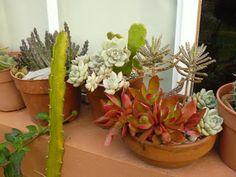 Jardines de cactus y suculentas: Jardines para regalar.