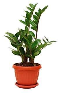 Garden Plants, Indoor Plants, House Plants, Bulb Flowers, Flower Pots, Zz Plant Care, Online Plant Nursery, Plantas Bonsai, Low Light Plants