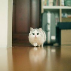 This 100 Photos Proves That Cats are the Earth Cutest Animals! - This 120 Photos Proves That Cats are the Earth Cutest Animals! Cute Baby Cats, Cute Cats And Kittens, Cute Funny Animals, Cute Baby Animals, I Love Cats, Crazy Cats, Kittens Cutest, Funny Cats, Pretty Cats