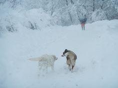 La neve, il femminile, zenzero e altri incommensurabili.