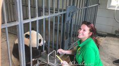 China DuJiangYan Panda Volunteer ChengDu WestChinaGo Travel Service www.WestChinaGo.com Tel:+86-135-4089-3980 info@WestChinaGo.com Chengdu, Volunteer Programs, Day Tours, China, Panda, Travel, Viajes, Destinations, Traveling