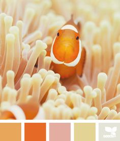 01.10.13 color swim