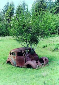 Abandoned car taken over by trees ;)