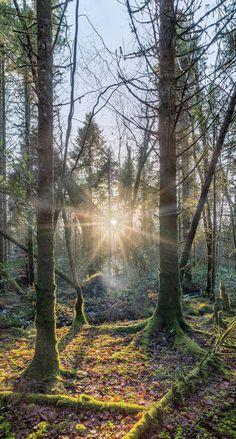 Setting sun from Ireland's autumnal splendour Autumnal, Ireland, Country Roads, Tours, Sunset, Irish, Sunsets