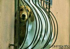 Dog , Tekirdağ , Turkey