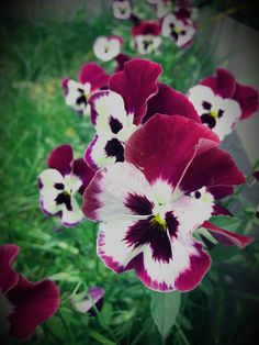 #flower #garden