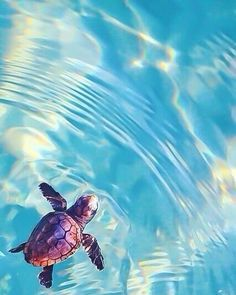Travel Discover cute baby animals cute baby turtles animals and pets funny Baby Sea Turtles Cute Turtles Turtle Baby Save The Sea Turtles Pet Turtle Tiny Turtle Cute Little Animals Cute Funny Animals Adorable Baby Animals Beautiful Creatures, Animals Beautiful, Animals And Pets, Funny Animals, Animals Sea, Rare Animals, Jungle Animals, Cute Baby Turtles, Turtle Baby