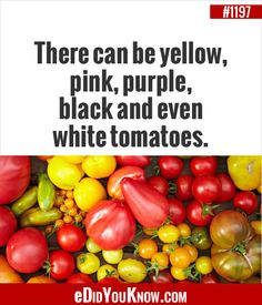 I love the different colors and flavors of tomatoes Wow Facts, True Facts, Weird Facts, Amazing Facts, Interesting Facts, Did You Know Trivia, Did You Know Facts, The More You Know, Good To Know