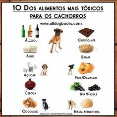 Toxic Food Keep your dog away from these 10 toxic foods. - You never know these days what is actually inside your dog's food, so why not make your own? Here are 2 simple and delicious dog food recipes that I'm sure your small dog will love. Dog Health Tips, Pet Health, Health Care, Face Health, Health Advice, Toxic Foods For Dogs, Homemade Dog, Schnauzer, Dog Care