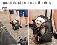 Funny Dogs Memes 40 Hilarious Funny Pictures of Dogs and Cats We Don't Deserve Funny Dog Memes, Funny Animal Memes, Cute Funny Animals, Cute Baby Animals, Funny Cute, Funny Dogs, Derp Dogs, Funny Fails, Super Funny