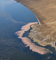 Home: Lake Bogoria is known for attracting thousands, even millions, of the brightly coloured birds