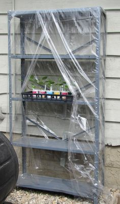 make a temporary 'hardening off' greenhouse, out of shelves and 2 or 3 vinyl dollar-store table cloths.