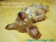 Find the peace within. Ground yourself daily. -Enlightened Indigo Child For more Indigo insights, read a bit of the book and buy your copy at the attached Amazon link. http://www.amazon.com/Enlightened-Indigo-Child-Personal-Flourishing/dp/1477455396/ref=cm_cr_pr_product_top ♥ Thank you for sharing ♥