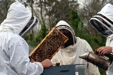 "Beekeepers around the United States have reported higher-than-usual colony losses since the fall of 2006. These elevated losses have been called ""Colony Collapse Disorder"" (or CCD). Some beekeepers in states reporting CCD have lost 50-90% of their colonies, often within a matter of weeks."