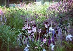 292 отметок «Нравится», 3 комментариев — Frank Heijligers (@frankheijligers) в Instagram: «The always good looking Echinacea pallida. #garden #gardendesign #planting #plantingdesign…»