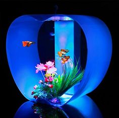Fish & Aquariums Self-Conscious Aqueon Kit Betta Falls Black Aquarium Fish Tank Aquariums & Tanks New In Box Bright In Colour