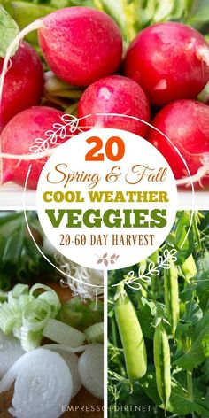Veggies to Grow in Weeks Quick-growing cool weather veggies to grow in spring and fall.Quick-growing cool weather veggies to grow in spring and fall.Quick-Growing Veggies to Grow in Weeks Quick-growing cool weather veggies to grow in spring and fall. Vegetable Garden Planner, Vegetable Garden For Beginners, Gardening For Beginners, Winter Vegetable Gardening, Growing Greens, Growing Veggies, Growing Tomatoes, Gardening Tools Names, Gardening Tips