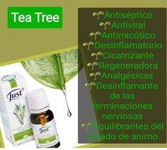 Tea Tree, Healthy Living, Polo, Tips, Aromatherapy, Notes, Naturaleza, Salud, Healthy Life