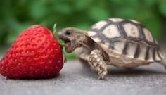 25 Cute Animals That Will Make You Go 'Aww'