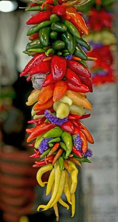 The Art of Vibrant Color – Obst Fruit And Veg, Fruits And Vegetables, Fresh Fruit, Spices And Herbs, Stuffed Hot Peppers, Color Of Life, Farmers Market, Food Art, Mexican Food Recipes