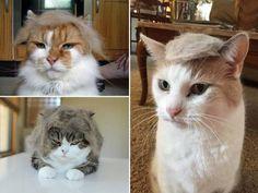 ブラッシングした猫の抜け毛を「かつら」にすると…?