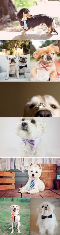 27 Adorable Wedding Dogs - good boys